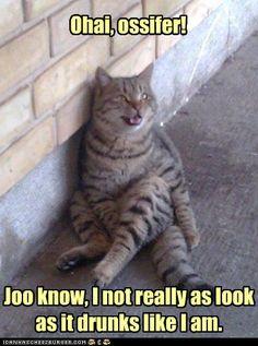 #lols #cats #drunk