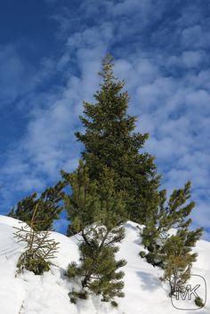 Natur in den Bergen über Ruhpolding; Rauschberg; Blauer Himmel mit Wolken; herrlich