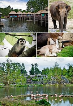 Pairi Daiza Zoo and Botanical Garden in Wallonia, Belgium | Expat Life in Belgium, Travel and Photography | CheeseWeb