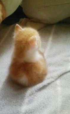 Wow, look at that orange glow.Fuzzy orange and white kitten. Wonder if my Mr Bond looked like this when he was lil. We adopted him when he was 5. Get Free Domain on http://cp.cx