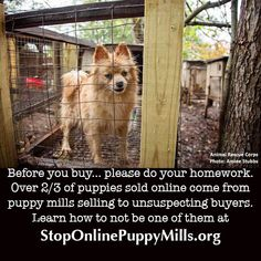 If you can't meet the mother, this is why. Learn what you can do to stop this at http://www.stoponlinepuppymills.org/