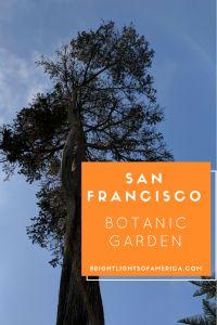 San Francisco | Botanic Gardens | Botanical Gardens | Flowers | plants | trees | gardens around the world | Aussie | Expat | Aussie Expat in US | expat life