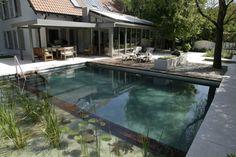 piscine naturelle de forme naturelle, plantes aquatiques et chaises longues design