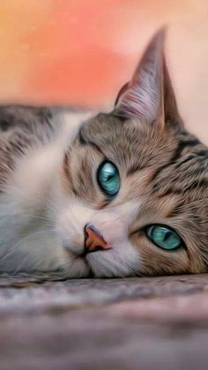 Cat With Blue Eyes Cat With Blue Eyes Cats Cute Cats Cute Animals