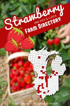 Strawberry Picking – a great summer family or date activity!