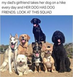 Cute animals - This image was shared via LOL Pics Funny Animal Memes, Dog Memes, Funny Animal Pictures, Funny Dogs, Funny Memes, Cute Little Animals, Cute Funny Animals, Funny Cute, Hilarious
