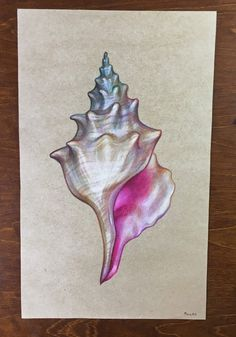 Drawing of shell on tinted paper.  Size of the paper is approximately 18 cm x 29 cm. These drawings that Im listing right now have been laying for a while and there can occur fingerprints, small damages and folds in the paper or colour spots, hence the low price. The edges are not always super even, so you might want to use a mat or crop it yourself. Have in mind that the colors may vary from monitor to monitor.  Thank you for supporting my work and dont hesitate to contact me with questions…