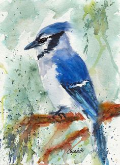 Blue Jay Blue Bird Original Watercolor painting by Barb Capeletti. Watercolor Art Diy, Watercolor Paintings For Beginners, Blue Jay Bird, Turtle Painting, Rock Painting, Print Artist, Color Azul, Bird Art, Watercolours