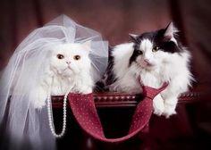 Cat's Bride and Groom http://ift.tt/2e7X5Uk