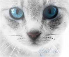 brightfeather (she-cat) mate: none kits: none