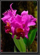 Hawaii Tropical Botanical Gardens, Hilo (Apr 23, 2007)