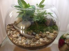 A natural terrarium with dry creek bed and some driftwood over the back