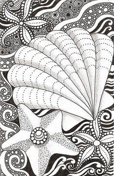 Shell and starfish   Flickr - Photo Sharing!