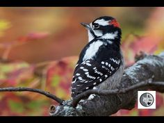 Identify 6 woodpeckers of Quebec Woodpeckers, Little Birds, Blue Jay, Camera Phone, North America, Wildlife, Wings, Creatures, Pets
