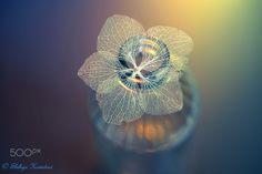 Sweet http://ift.tt/1aUiqL5 Wonder Macro http://ift.tt/1k8kfr5 Meyer Optik http://500px.com/ShihyaKowatari/sets/meyer_optik