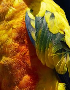 Abstract Bird Photography by Thomas Lohr | Inspiration Grid | Design Inspiration