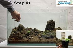 Setting up a planted aquascape: step by step instructions, including plant names