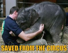 Boycott circuses until they leave animals out of them.