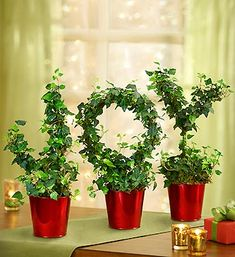 """Joy to the World"" is one of the most popular Christmas songs and in its honor we've spelled out JOY using  topiary Christmas plants! :)"