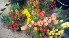 tulipány (84 pieces)