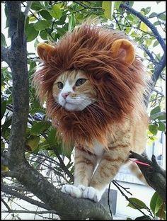 viva lion cat