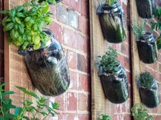 Here are SMART IDEAS FOR GROWING A VERTICAL GARDEN that you can do!