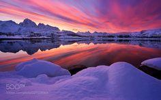 Arctic delight by FelixInden