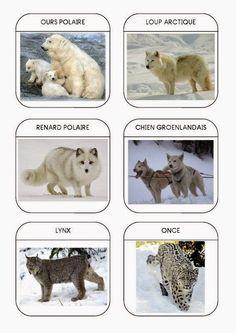 Sempre criança: Animais Polares        http://nounoulolo88.centerb...