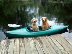 Goldens love to kayak.. just going out on the lake be back 4 dinner..don't start without us.