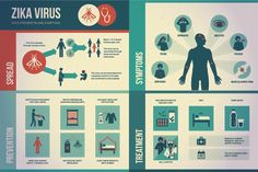 Image result for zika infographic