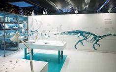 Dinosaurs - Successful Creatures of Evolution: ATELIER BRÜCKNER