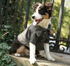 another cute doggy in a coat.