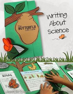 Observe and describe major stages in the life cycles of plants and animals, including beans and butterflies. Complete butterfly life cycle unit with minilessons, exploratory learning labs, math and literacy connections, and culminating foldable lapbook. First Grade Science, Primary Science, Kindergarten Science, Elementary Science, Teaching Science, Science Activities, Sequencing Activities, Science Labs, Preschool