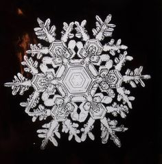 "Bentley poetically described snowflakes as ""tiny miracles of beauty"" and snow crystals as ""ice flowers."""