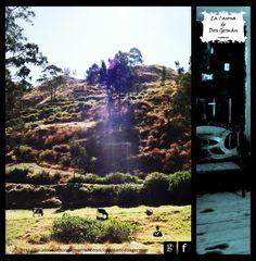 Paisaje y ganado de la Villa de San Juan de Obrajillo. #Obrajillo #Canta #Lima #Peru #LaCasonaDeDonGermán © Tarah Mahali Cano Casquero