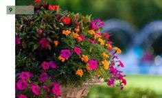 potee-fleurie-9-impatiens-petunia-oeillets