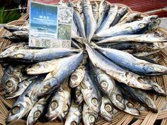 Budboron Cebu, Fish, Pisces, Cebu City, Men's Fitness Tips