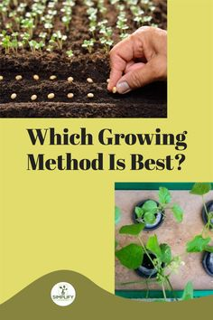 Naturally, once you've decided where you want to plant your garden, you'll need to figure out what approach you want to use. There are different methods of growing. You choose what the best for you and what you can do. // Hydroponics // Soil Growing // Coco Coir Method // #growingmethods #growathome #gardening Vegetable Garden Soil, Wood Mulch, Planting Shrubs, Organic Soil, Hydroponics System, Coir, Potting Soil, Growing Plants, Garden Tools