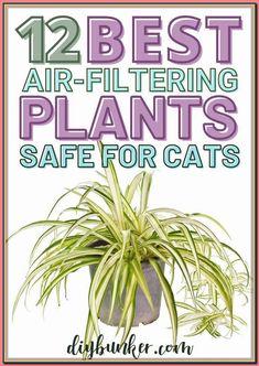 (paid link) Feline kind home flora and fauna ideas #catsafehouseplants