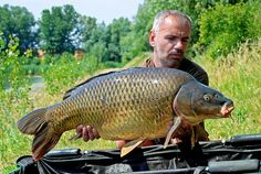 Carp, Fish, Pisces, Common Carp