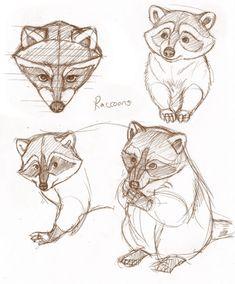 drawing stuff Cómo dibujar un mapache? Animal Sketches, Cute Animal Drawings, Drawing Sketches, Pencil Drawings, Art Drawings, Drawing Stuff, Animals Watercolor, Raccoon Drawing, Animal Doodles