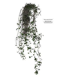 3D transparent vines plant by ~madetobeunique on deviantART