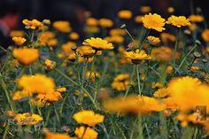 Flowers by santusaha #nature #mothernature #travel #traveling #vacation #visiting #trip #holiday #tourism #tourist #photooftheday #amazing #picoftheday