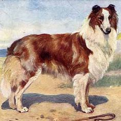Reminds me of Lad from my childhood stories. Albert Payson Terhune taught me a lot about dogs.