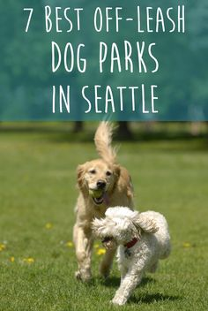 Sometimes a dog just needs to get outside and run with its own kind. When your dog is sitting by the door and begging for a game of fetch, visit one of these seven highly-rated dog parks in Seattle for some fun and exercise. #Seattle