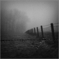 morning dew, philip vergeylen