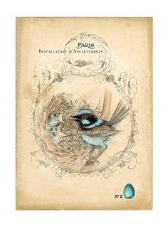 Blue Wren Birds Nest ACEO Art Print    $5.50