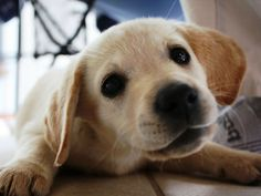 4 Ways to Improve Your Dog's Life While You're at Work