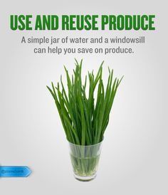 Use and Reuse Produce Don't throw away the bottoms of your green onions, romaine lettuce, or celery bought from the store. Simply place them in a cup of water, set in the windowsill, and wait for them to regrow. Once the roots grow, you could also plant the veggie in a pot and place them outside to use all summer long.