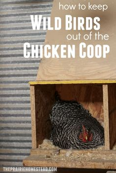 How to Keep Wild Birds out of the Chicken Coop
